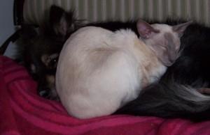 Kassinen ja Ansa-koira